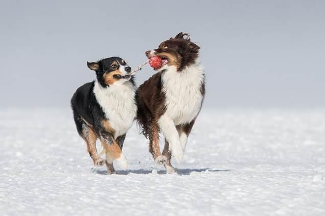 Ein Bild, das draußen, Hund, Tier, Säugetier enthält. Automatisch generierte Beschreibung